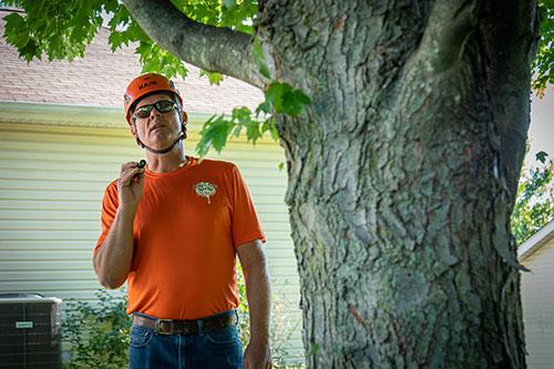 Certified Arborists in Franklin County, Missouri » Craig's ...